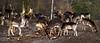 2018-01-28 (Giåm) Tags: dyrehaven jægersborgdyrehave klampenborg dådyr dovhjort fallowdeer daim hovedstaden sjælland själland zealand seeland danmark denmark danemark dänemark giåm guillaumebavière