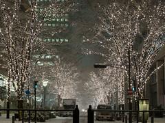 Snowing illumination street (gemapozo) Tags: snowing illumination night 645z pentax tokyo japan marunouchi 千代田区 東京都 日本 jp hdpentaxdfa645macro90mmf28edawsr 雪景色 夜景 丸の内 イルミネーション