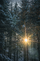 Wintersun (tehroester) Tags: sun sunset forest nature trees winter snow light lighting orange blue hike sony a7 germany golden hour landscape wood sky ngc