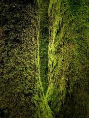 'Deep Forest'                (see description) (Milesofgadgets ) Tags: iphone8plus woodland forest trees parclodgewales breconbeaconsnationalpark iphone 8plus petermiles petermiles