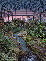 Twilight Garden (Rollingstone1) Tags: wintergarden duthiepark aberdeen waterfeature water plants flowers hothouse garden stream colour building indoor rocks nature art architecture artwork arch botanical park