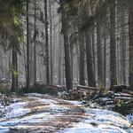 Wermsdorfer Wald thumbnail