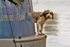 Enjoy the simple things (stellagrimsdale) Tags: barge dog water boat canal canalboat blue cute cutedog totterhammarshes