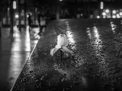 The Flower (C@mera M@n) Tags: 911memorial blackandwhite city manhattan monochrome ny nyc newyork newyorkcity newyorkcityphotography newyorkphotography nightphotography place places rain urban flower night outdoors