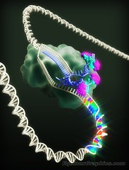 DNA mutagenesis by CRISPR