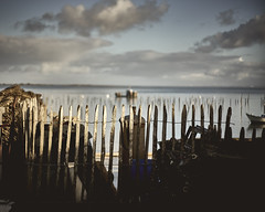 (thierrylothon) Tags: leica leicasummiconrigidm50mm1950 sony sonya7riii publication flickr fluxapple phaseone captureonepro c1pro aquitaine gironde presquilecapferret lecanon paysage france fr