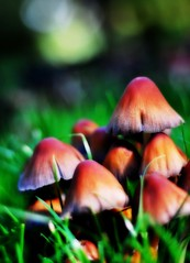 2010-10-06a2 Kew Mushrooms ([Ananabanana]) Tags: nikon d40 gimp photoscape nikonistas nikonista nikon50mm118ais nikkor50mm118ais nikkor50mmf18 nikon50mmf18 50mm niftyfifty manualfocus prime primelens london kew botanic botanicgardens kewbotanicgardens mushroom mushrooms orton grass macro blur green nature fungi