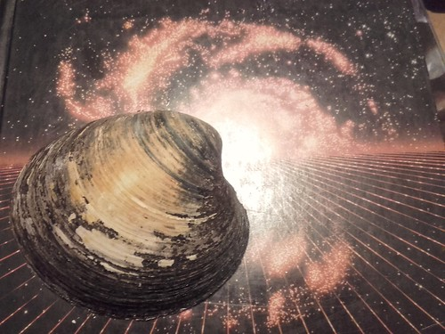 Arctic clam shell (~90 years old) on an astrophysics textbook