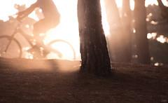 Bosques marinos (Cruz-Monsalves) Tags: atardecer sunset bicicleta bosque forest arbol bike light foggy neblina