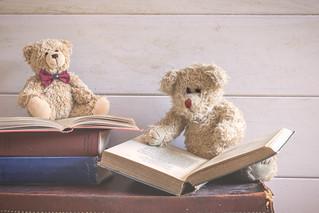 58/365: Bear-ly educated