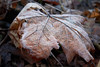 _MG_2790_C (grzegorz_63) Tags: winter leaves hoarfrost makro macro texture nature outside canon70d