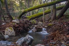 Mitchel Rock Trail (Juan Pablo J.) Tags: naturaleza naturephotography nature longexposurephotography landscapes river creek trees rocks canon5dmkii canon24105mmf4l outdoors