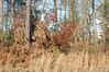 Tall Grass And Brush. (dccradio) Tags: lumberton nc northcarolina robesoncounty outdoors outside nikon d40 dslr nature natural tree trees greenery landscape treeline tallgrass growth brush sky bluesky clouds