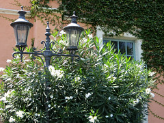 Sunny Paradise (ETFoster) Tags: lamppost california spanish architecture eric foster ivy