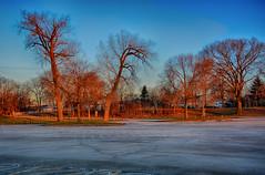Winter Trees at Golden Hour (kendoman26) Tags: hdr nikhdrefexpro2 niksoftware nikon nikond7100 tokinaatx1228prodx tokina tokina1228 goldenhour trees winter