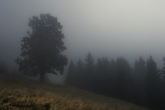 Alpine Fog (Netsrak) Tags: alpen alps berg berge eu europa europe kleinwalsertal nebel fog mist mountain mountains baum wald wiese