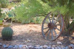 Tucson Wagon Wheel Digital Watercolor (randyherring) Tags: az arizona tucson us bloom cactus desert desertplants green outdoor plant rocks tree wagonwheel