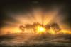 Sonnenaufgang im dichten Nebel ... die Wisseler Dünen, Niederrhein (nigel_xf) Tags: wissel wisselerdünen kalkar kreiskleve dünen dunes binnendünen natur nature landschaft sonnenstrahlen strahlen sunrays sun sonne landscape nikon d750 nigel nigelxf vsfototeam sunrise sonnenaufgang