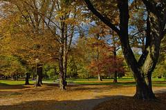 Once upon a time in our park (Matjaž Skrinar) Tags: 1025fav 100v10f 250v10f