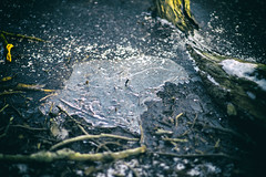 IceD (Svendborgphoto) Tags: winter denmark dof detail nikkor nikkorais aisnikkor 85mm14 f14 sonya7ii