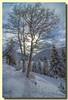 Col des Feignes sous Vologne - Belle Hutte - Vosges (jamesreed68) Tags: 88 col hiver sapin vosges france canon eos 600d feignes bellehutte