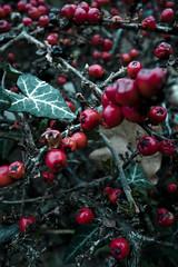 Berries (sam.naylor) Tags: walk ricoh digital grd iv 24mm berries colour