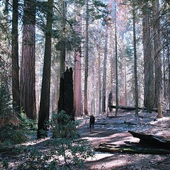Lost amongst the giants (these ones are tiny) (astrangelyisolatedplace) Tags: lost amongst giants these ones tiny