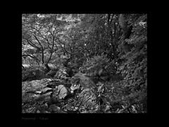 Calmness (Antoine - Bkk) Tags: garden japan tokyo black white monochrome tree water stone fujifilm darktable international house roppongi