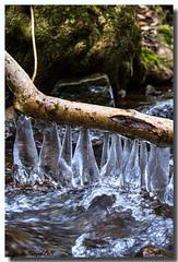 Grappes de glace (jamesreed68) Tags: ruisseau eau glace froid 68 hautrhin hiver alsace grandest france paysage nature canon eos 600d siehlbaechle