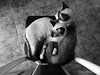 DSC04914 net (rauly 1974) Tags: gato gatos cat cats kit kits