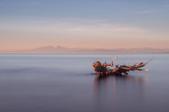Water and wood (dono heneman) Tags: water eau wood bois paysage landscape waterscape seascape minimaliste minimalisme minimalism leverdesoleil sunrise poselongue pose longue longexposure ciel sky nuage cloud montagne montain mer sea mediterranée canigou végétal vegetal végétation arbre tree tronc trunk reflet reflection refletaquatique plage beach côte coast latamarissière agde hérault languedocroussillon occitanie france pentax pentaxart pentaxk3