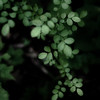Thicket Details 042 (noahbw) Tags: d5000 dof nikon ryersonwoodsforestpreserve abstract blur dark darkness depthoffield forest landscape light lowlight natural noahbw quiet square still stillness summer woods thicketdetails