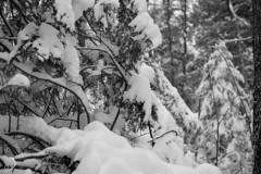 Douillettes (bd168) Tags: blancetnoir hiver 50mm fuji