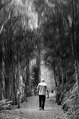 20180114-07-The vanishing (Roger T Wong) Tags: 2018 australia bw hobart mtwellington pipelinetrack rogertwong sel85f18z sony85mmf18 sonya7ii sonyalpha7ii sonyfe85mmf18 sonyilce7m2 tasmania blackandwhite mono monochrome outdoors portrait walk