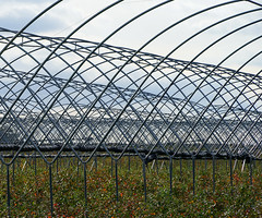 Polytunnel Frames near Nassington (Jayembee69) Tags: polytunnel northants northamptonshire farm arable marketgarden england english uk unitedkingdom britain british gb frame geometric pattern farming agriculture nassington lyvedenfarm