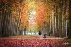 Paris_Versailles_Petit_Parc_20161026_0052 (ivan.sgualdini) Tags: amazing autumn autunno canon france francia garden giardini leaves memory parc parigi paris petit photografy reggia trees versailles visit
