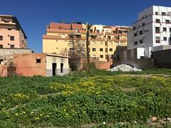 IMG_9463 (anisaheawad) Tags: morocco travel traveling nature digital marrakesh jardin majorelle