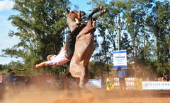 Soares e Bolinha da Alvorada (Eduardo Amorim) Tags: gaúcho gaúchos gaucho gauchos cavalos caballos horses chevaux cavalli pferde caballo horse cheval cavallo pferd pampa campanha fronteira quaraí riograndedosul brésil brasil sudamérica südamerika suramérica américadosul southamerica amériquedusud americameridionale américadelsur americadelsud cavalo 馬 حصان 马 лошадь ঘোড়া 말 סוס ม้า häst hest hevonen άλογο brazil eduardoamorim gineteada jineteada
