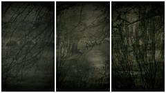Daguerréotypes - Sous le Pont Mirabeau (jeanfenechpictures) Tags: pont bridge paris seine pontmirabeau mirabeau daguerréotype arbres trees guillaumeapollinaire poèmes poems noiretblanc blackandwhite monocrhome fleuve history histoire france