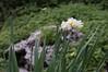 Ψίνθος (Psinthos.Net) Tags: ψίνθοσ psinthos nature countryside φύση εξοχή wildflowers wildflower flowers flower λουλούδια λουλούδι άνθη blossoms whiteblossoms λευκάάνθη άσπραάνθη κίτριναάνθη yellowblossoms narcissus νάρκισσοσ νάρκισσοσοκυπελλοφόροσ τσαμπάκι μυρσίτζια μυρσίτζι βράχοσ πέτρα stone rock greens χόρτα οξαλίδεσ sorrels ξυνιέσ ξυνάκια ξινάκια κίτριναλουλούδια yellowflowers fasouli φασούλι fasuli γύρη pollen απόγευμα απόγευμαχειμώνα afternoon january ιανουάριοσ γενάρησ χειμωνιάτικοαπόγευμα χειμώνασ winter