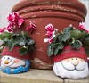6514 v1 Pots and plants (Andy - Busyyyyyyyyy) Tags: ccc cyclamen eee elf fatherchristmas fff flower fromraworiginal paint plant planter pot ppp santaclaus sss terracotta ttt explore