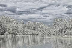 The Snowstorm at Lake Eufaula (Thomas Vasas Photography) Tags: nature landscapes winterscapes snowscapes waterscapes winter wintersky seasons snow water trees clouds lakeeufaula lakeeufaulastatepark eufaula alabama