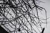 057 (shafa_rah) Tags: nature gothic urban coventry street