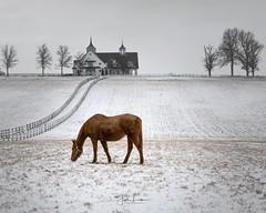 Manchester Farm [ In Explore - Thank You] (the_lowe_life) Tags: travel photography lexington kentuckykicksass barn manchesterfarm horsefarm throughbred tamron d600 nikon thebluegrassstate keeneland kentucky snow winter