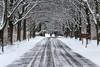 samsebeskazal-5935.jpg (samsebeskazal) Tags: winter newjersey ringwood