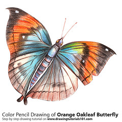 Orange Oakleaf Butterfly with Color Pencils [Time Lapse] (drawingtutorials101.com) Tags: orange oakleaf dead leaf butterfly butterflies animal animals sketching sketch sketches draw drawing drawings color colors coloring how timelapse video pencil speed