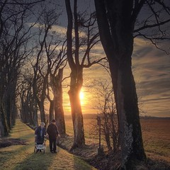 Life's Path (M a r i k o) Tags: iphone iphonex iphoneography iphonephotography mobile mobilephotography mariko square path trees oldcouple couple people sunset sun winter walking stroll ebersberg bavaria bayern germany