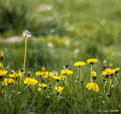 Primavera (Jabi Artaraz) Tags: jabiartaraz jartaraz zb euskoflickr primavera udaberria nature flower