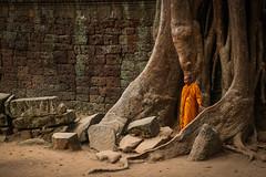 The Monk And The Tree (preze) Tags: taprohm angkor siemreapprovince kambodscha cambodia südostasien mönch monk baum tree wurzeln root templeruin tempelruine tombraidertemple laterit sandstein