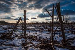 Ein bisschen Schnee im Maisfeld (Doblinus) Tags: schnee abendstimmung sony maisfeld a6500 samyang12mm winter acker koppel